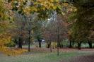 10.10.2015 Stadtmeisterschaften im Laufen - Zirndorf_2
