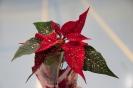 20.12.2013 Weihnachtsfeier mit Sportabzeichenverleihung - Zirndorf_32